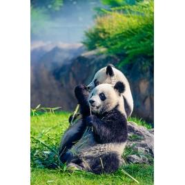 SLVie 5 - sortie famille au Zoo de Beauval