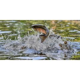 SLVie 9 - Concours de pêche à la truite